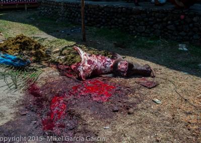 Bufalo muerto